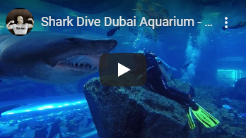 dubai shark diving